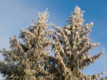 Paisagem do inverno com abeto nevado Fotos de Stock
