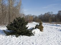 Paisagem do inverno com abeto pequeno Foto de Stock Royalty Free