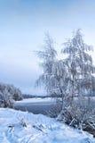 Paisagem do inverno com as árvores, cobertas com foto de stock