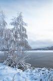 Paisagem do inverno com as árvores, cobertas com imagens de stock