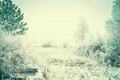 Paisagem do inverno com as árvores cobertas com a geada e a neve no dia de inverno Fotografia de Stock