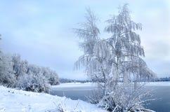 Paisagem do inverno com as árvores, cobertas com os hoarfros fotos de stock