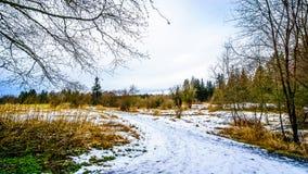 Paisagem do inverno com campos cobertos de neve do trajeto e de grama em Campbell Valley Park Imagem de Stock Royalty Free