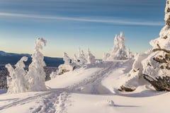Paisagem do inverno com corrida de esqui no nascer do sol Imagens de Stock