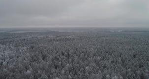Paisagem do inverno com floresta video estoque