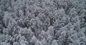 Paisagem do inverno com floresta vídeos de arquivo