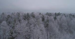 Paisagem do inverno com floresta filme
