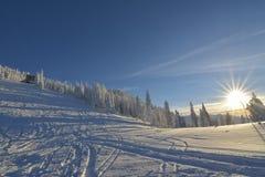 Paisagem do inverno com a floresta dos abeto coberta por nevadas fortes na montanha de Postavaru Imagem de Stock Royalty Free