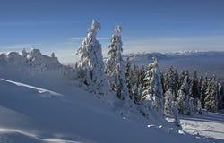 Paisagem do inverno com a floresta dos abeto coberta por nevadas fortes na montanha de Postavaru, recurso de Poiana Brasov, Fotos de Stock Royalty Free