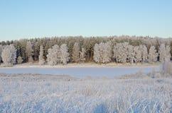 Paisagem do inverno com geada Imagens de Stock Royalty Free