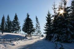 Paisagem do inverno com neve Fotografia de Stock Royalty Free