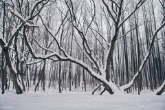 A paisagem do inverno com neve cobriu árvores Fotografia de Stock