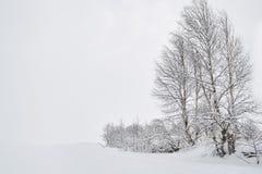 Paisagem do inverno com os vidoeiros na neve foto de stock