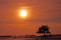 Paisagem do inverno com pinho Fotografia de Stock Royalty Free