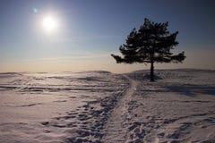 Paisagem do inverno com pinho Imagens de Stock