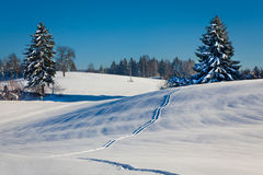 Paisagem do inverno com árvores nevado e trajeto na neve Fotos de Stock Royalty Free