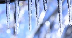 Paisagem do inverno com sincelos de cristal e gotas brilhantes de queda Vídeo com sincelo no fundo brilhante bonito Stalact vídeos de arquivo