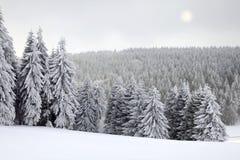 Paisagem do inverno com Sun foto de stock royalty free