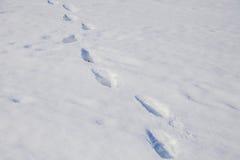 Paisagem do inverno com um passeio Fotos de Stock
