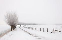 Paisagem do inverno com uma fileira de salgueiros do descornado Imagem de Stock