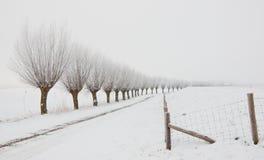 Paisagem do inverno com uma fileira de salgueiros do descornado Imagens de Stock Royalty Free
