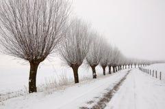 Paisagem do inverno com uma fileira de salgueiros do descornado Fotos de Stock