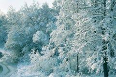 paisagem do inverno com uma floresta coberto de neve Imagens de Stock
