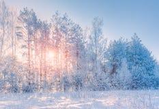Paisagem do inverno com uma vista das árvores na neve com o sol imagens de stock