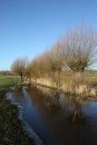 Paisagem do inverno com Willow Trees e reflexões Imagens de Stock
