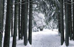 Paisagem do inverno da floresta do inverno com árvores cobertos de neve Imagem de Stock Royalty Free