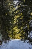 Paisagem do inverno da floresta, sol que brilha através das árvores na floresta Imagem de Stock