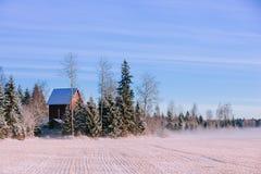 Paisagem do inverno da manhã Árvores da neve e névoa gelado no campo Fotos de Stock