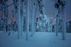Paisagem do inverno da noite na floresta congelada após o blizzard da neve fotografia de stock