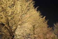 Paisagem do inverno das árvores Filiais de árvore cobertas com a neve Geada da noite do inverno Fotos de Stock