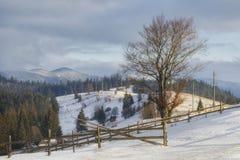 Paisagem do inverno das montanhas Carpathian No primeiro plano, uma árvore de faia é iluminada acima pelo sol fotos de stock