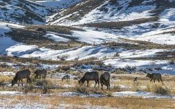 Paisagem do inverno de Yellowstone fotos de stock