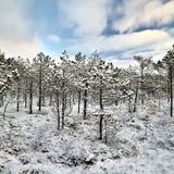 Paisagem do inverno do amanhecer Imagem de Stock Royalty Free
