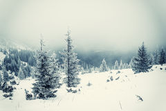 Paisagem do inverno do vintage Fotografia de Stock Royalty Free