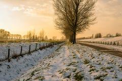 Paisagem do inverno durante o por do sol Imagens de Stock Royalty Free