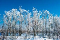 Paisagem do inverno em Sib?ria imagem de stock