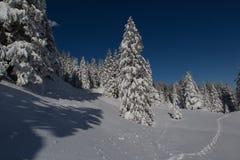 Paisagem do inverno em Suíça Fotos de Stock