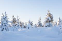 Paisagem do inverno em um dia ensolarado Fotos de Stock Royalty Free