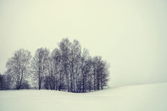 Paisagem do inverno em um dia sombrio Imagem de Stock