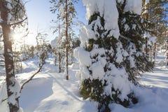 Paisagem do inverno em um por do sol Imagens de Stock Royalty Free