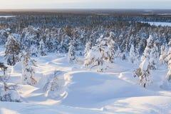 Paisagem do inverno em um por do sol Fotografia de Stock