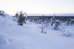 Paisagem do inverno em um por do sol Foto de Stock