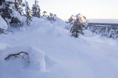 Paisagem do inverno em um por do sol Imagem de Stock