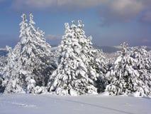 Paisagem do inverno, floresta da árvore coberta por Neve foto de stock royalty free