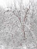 Paisagem do inverno fora da janela Neve branca nos ramos de uma árvore imagens de stock