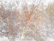 Paisagem do inverno fora da janela Pouco titmouses em uma árvore imagens de stock